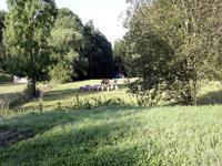 Pferde_Schafe